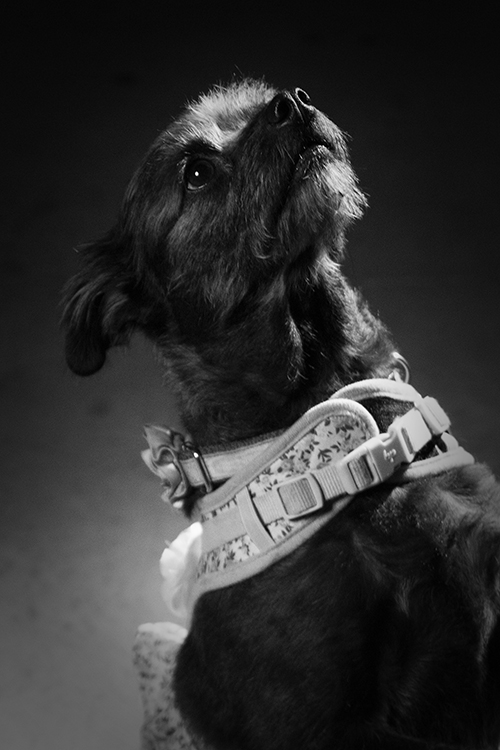 Athena McCarty Dog